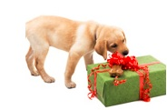 christmas-gift-guide-for-pets